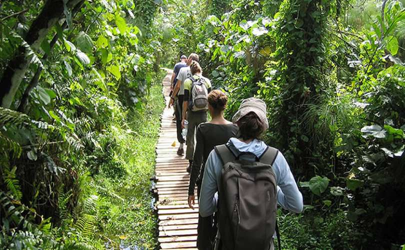 Budongo Forest Nature Walk